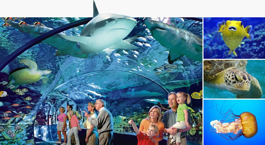 Hotels Near Toronto Ripleys Aquarium